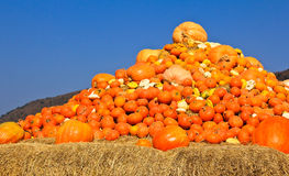 Pumpkins piled on bales of straw. Royalty Free Stock Photos