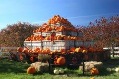 Pumpkins. Piled up for autumn Stock Photos