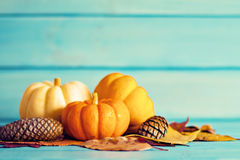 Pumpkins and pine cones Stock Image