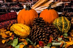Pumpkins Pinecones Corn and Gourds-Fall Still life stock photo