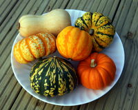 Pumpkins on a plate. Pumpkins and butternut squash on a white plate Royalty Free Stock Photo