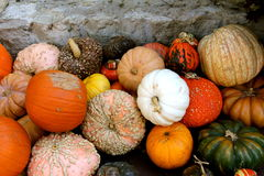 Pumpkins A Plenty Against Stone Stock Photos