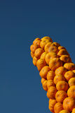Pumpkins pointing Stock Images