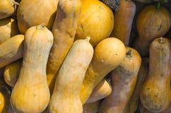 Pumpkins. A pumpkin is a cultivar of the squash plant Stock Images
