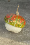 Pumpkins. A pumpkin is a cultivar of the squash plant Royalty Free Stock Images