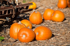 Pumpkins on the pumpkin patch Royalty Free Stock Photos