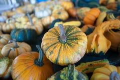 Pumpkins on pumpkin patch Royalty Free Stock Photos