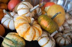 Pumpkins on pumpkin patch Stock Images