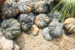 Pumpkins on the pumpkin patch Stock Photography