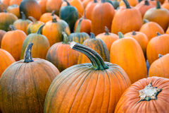 Pumpkins at the pumpkin patch Stock Image