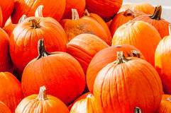 Pumpkins on a pumpkin patch Royalty Free Stock Photography