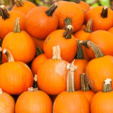 Pumpkins on a pumpkin patch Stock Photo