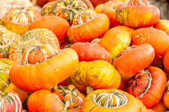 Pumpkins on a pumpkin patch Royalty Free Stock Image