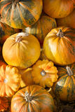 Pumpkins in pumpkin patch. Pumpkins on a field in the countryside Stock Photo