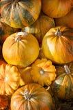 Pumpkins in pumpkin patch Stock Photo