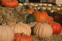 Pumpkins Pumpkins Everywhere. This is a display of multicolored pumpkins at a local farmers market in Limestone County Alabama USA royalty free stock photos