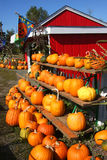 Pumpkins, pumpkins! Portland Oregon. Pumpkins on shelves ready for buyers and a red barn shop Stock Photography