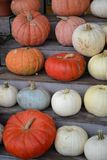 Pumpkins!-Pumpkins!-Pumpkin Stand!-2. Pumpkins on a wooden stand in a row at a harvest produce stand Royalty Free Stock Images