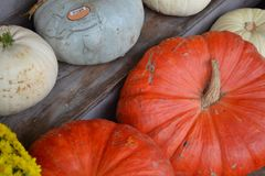 Pumpkins!-Pumpkins!-Pumpkin Stand!-3. Pumpkins on a wooden stand in a row at a harvest produce stand Royalty Free Stock Images