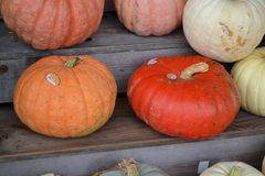 Pumpkins!-Pumpkins!-Pumpkin Stand!-6. Pumpkins on a wooden stand in a row at a harvest produce stand Royalty Free Stock Images