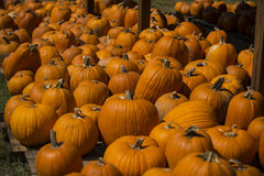 Pumpkins pumpkins pumpkins Royalty Free Stock Photos