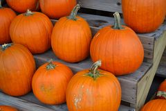 Pumpkins!-Pumpkins!-Pumpkins!. Several orange pumpkins on a wooden stand Royalty Free Stock Photo