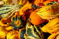 The pumpkins put up for sale on the market. Colorful pumpkins offered for sale on the market Royalty Free Stock Images
