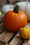 Pumpkins and Quince Royalty Free Stock Image