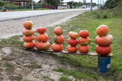 Pumpkins ready for sale Royalty Free Stock Photography