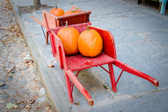 Pumpkins in red barrow. Two red barrows containing pumpkins - ancient town street royalty free stock images