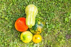 Pumpkins red green yellow and zucchini cultivar squash plant top view Cucurbita pepo fresh from the market for thanksgiving or royalty free stock photography