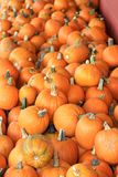 Pumpkins at a Road side market Royalty Free Stock Image