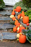 Pumpkins on Rock Stock Photography