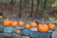 Pumpkins on rocks royalty free stock photo