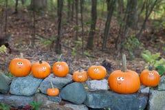 Pumpkins on rocks royalty free stock photo