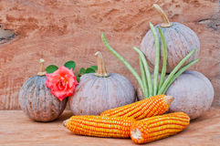 Pumpkins, rose, corn and cowpea. Rustic autumn still life with mini pumpkins, rose, corn and cowpea on old wood in background. Macro with shallow dof Stock Photography