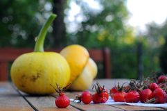 Pumpkins and rose hips Royalty Free Stock Image