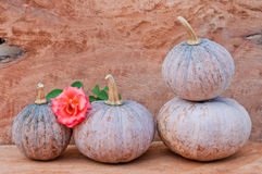 Pumpkins and rose. Rustic autumn still life with mini pumpkins and rose on old wood in background. Macro with shallow dof Stock Images