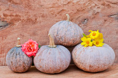 Pumpkins and rose. Rustic autumn still life with mini pumpkins and rose on old wood in background. Macro with shallow dof Royalty Free Stock Photography