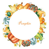 Pumpkins. Round template with decorative pumpkins watercolor painting on white background. Stock Image