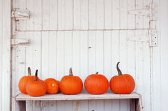 Pumpkins in a row. Pumpkins arranged on a shelf against a white barn wall stock photos