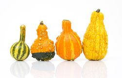 Pumpkins in a row Royalty Free Stock Photo