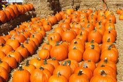 pumpkins row Стоковое Фото