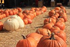 pumpkins row Стоковая Фотография RF