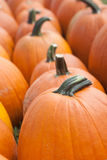Pumpkins in a Row Royalty Free Stock Photos