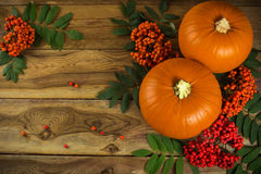 Pumpkins and rowan Royalty Free Stock Photo