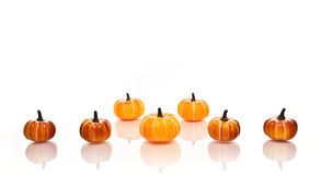 Pumpkins in rows Royalty Free Stock Image
