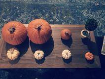 Pumpkins in rows stock photography