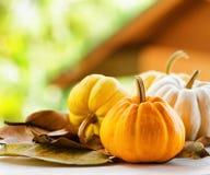 Pumpkins on rural landscape background Stock Images