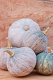 Pumpkins. Rustic autumn still life with mini pumpkins on old wood in background. Macro with shallow dof Stock Photography
